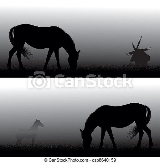 Horse in the fog. Simple gradient   - csp8640159