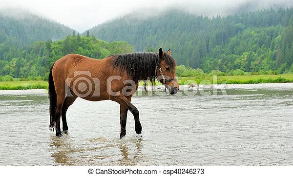 Horse in water - csp40246273