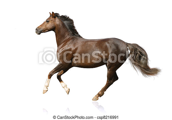 horse isolated - csp8216991