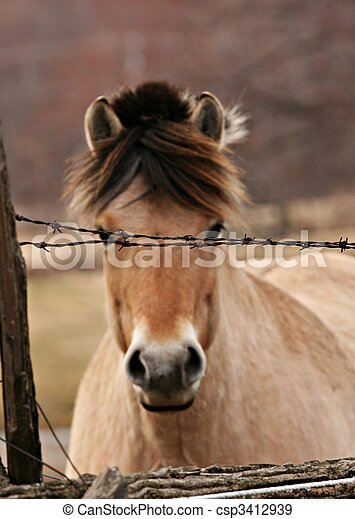 Horse looking through fence - csp3412939