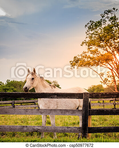 Horse of a farm - csp50977672