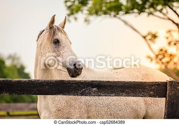 Horse of a farm - csp52684389