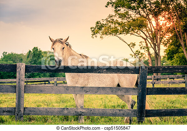 Horse of a farm - csp51505847