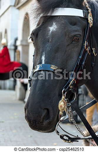 Horse of the Queens Household Cavalry in London - csp25462510