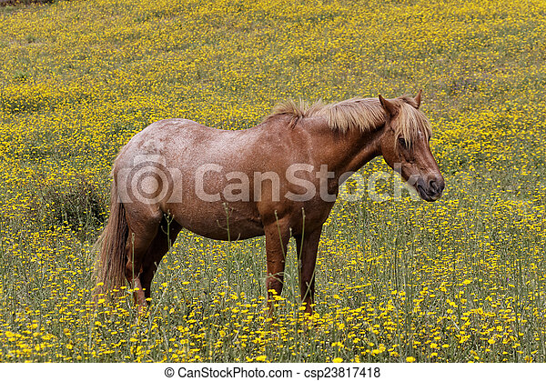 Horse on a flower meadow in Corsica - csp23817418