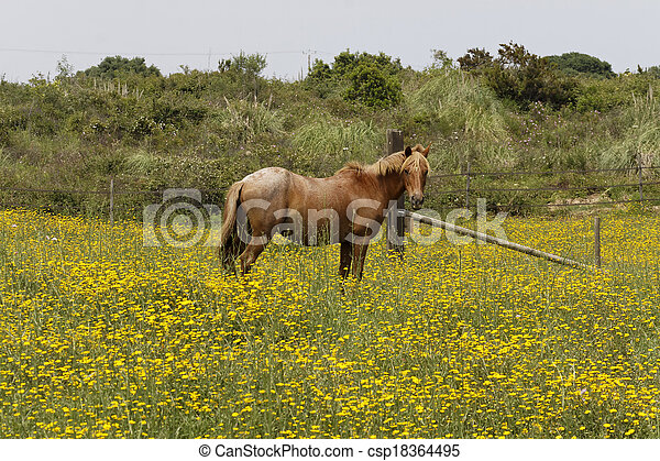 Horse on a flower meadow in Corsica - csp18364495