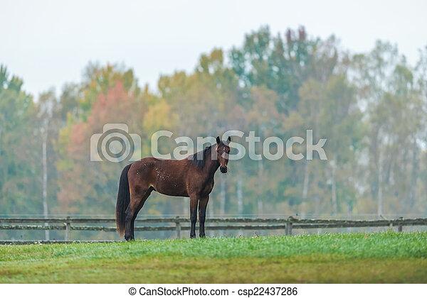Horse on a green grass field during autumn, Sweden  - csp22437286