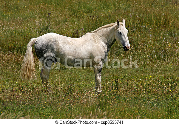 Horse on a meadow in Cornwall - csp8535741