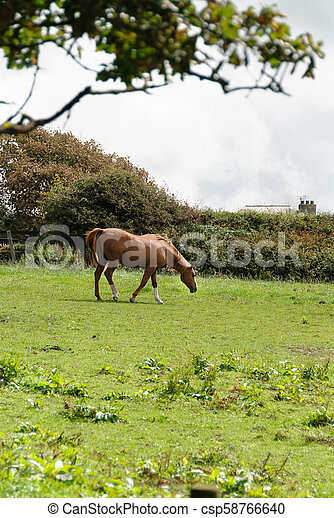 horse on a meadow in Tintagel in Cornwall - csp58766640
