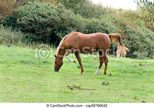 horse on a meadow in Tintagel in Cornwall - csp58766642