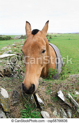 horse on a meadow in Tintagel in Cornwall - csp58766636