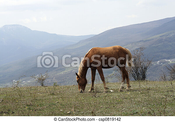 Horse on a meadow - csp0819142