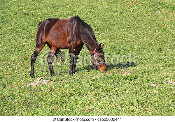 Horse on a meadow - csp25002441