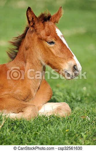 Horse on a meadow - csp32561630