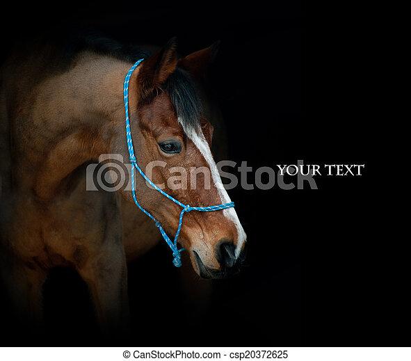 horse on black - csp20372625