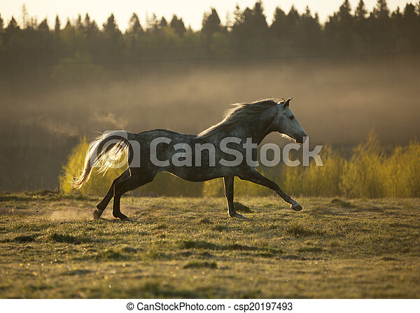 horse on fog meadow in morning - csp20197493