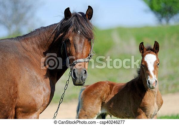 Horse on pasture - csp40246277