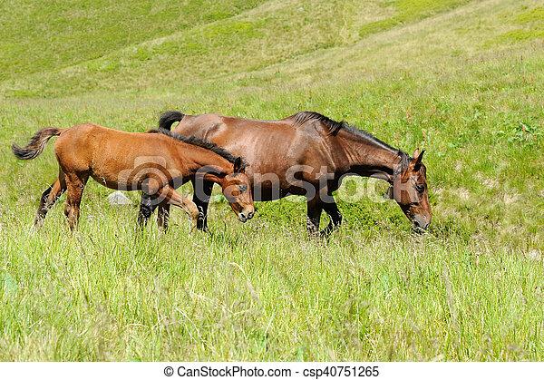 Horse on pasture - csp40751265