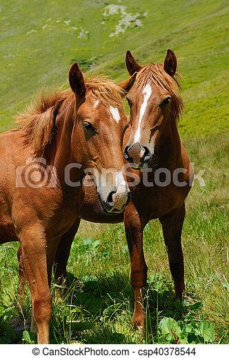 Horse on pasture - csp40378544