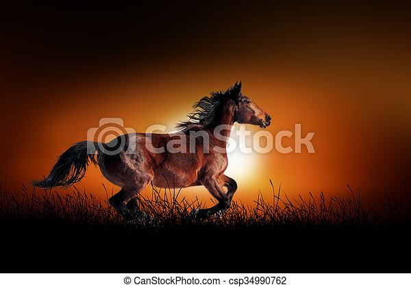 Horse on the background of sunset - csp34990762