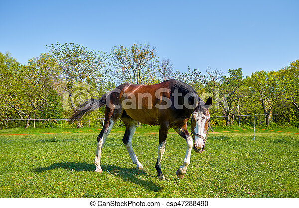 Horse on the green  grass - csp47288490