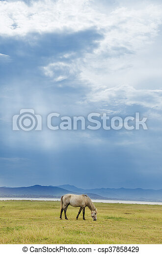 Horse on the pasture - csp37858429