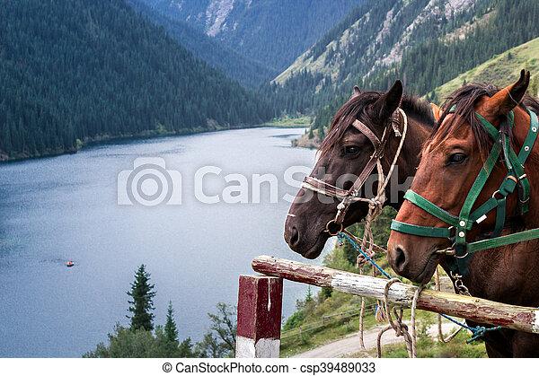 horse on the shore of a mountain la - csp39489033