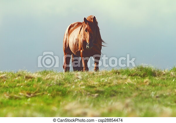 horse on top of the hill - csp28854474
