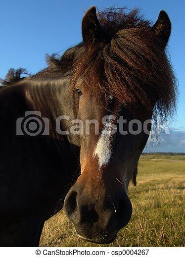 Horse - csp0004267