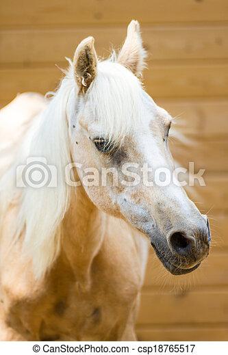 Horse - csp18765517
