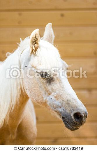 Horse - csp18783419