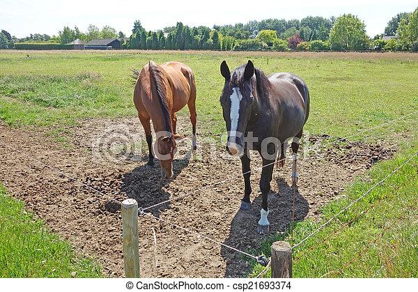 horse - csp21693374