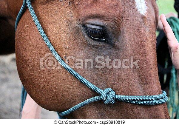 horse - csp28910819