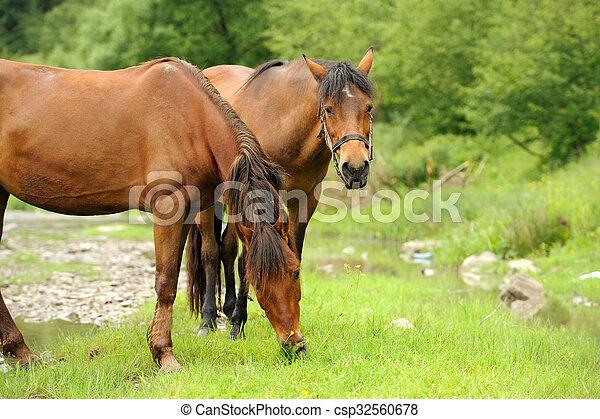 Horse - csp32560678