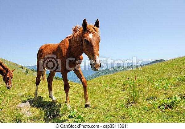 Horse - csp33113611