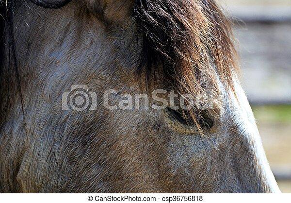 Horse - csp36756818