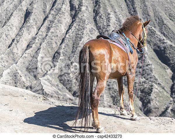 Horse - csp42433270
