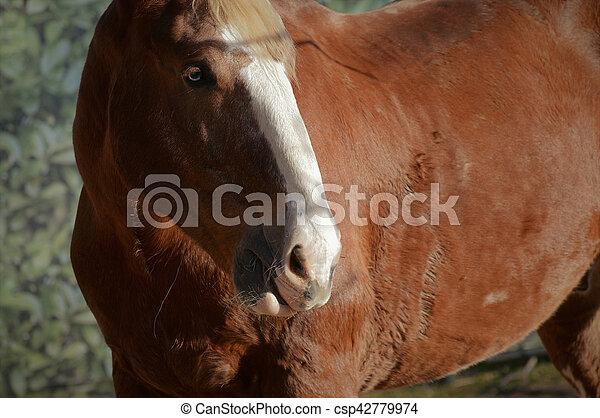 Horse - csp42779974
