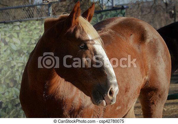 Horse - csp42780075