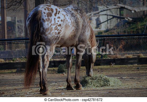 Horse - csp42781672