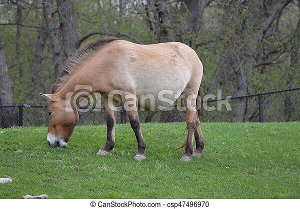 Horse - csp47496970