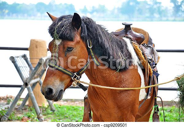 Horse - csp9209501