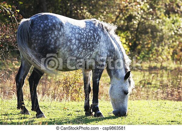 Horse - csp9863581