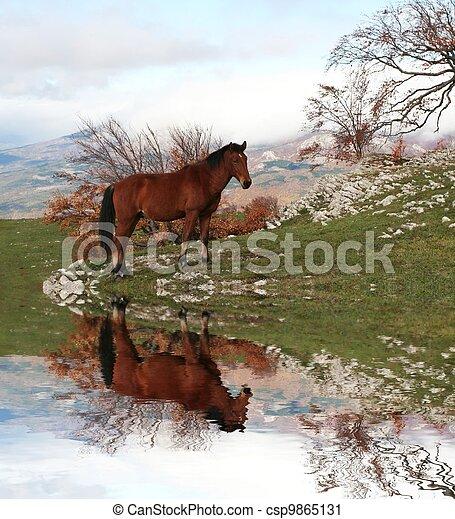 Horse - csp9865131