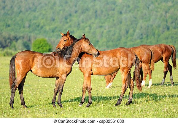 Horse - csp32561680