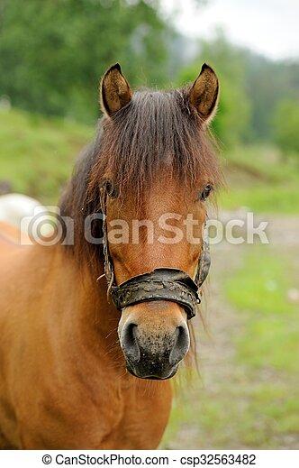 Horse - csp32563482