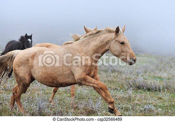 Horse - csp32566489
