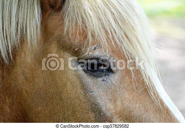 Horse - csp37829582