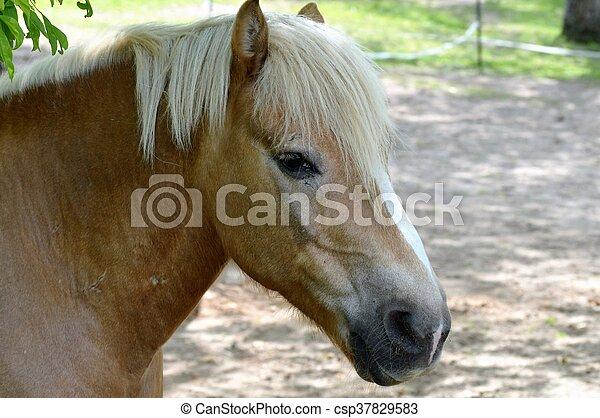 Horse - csp37829583