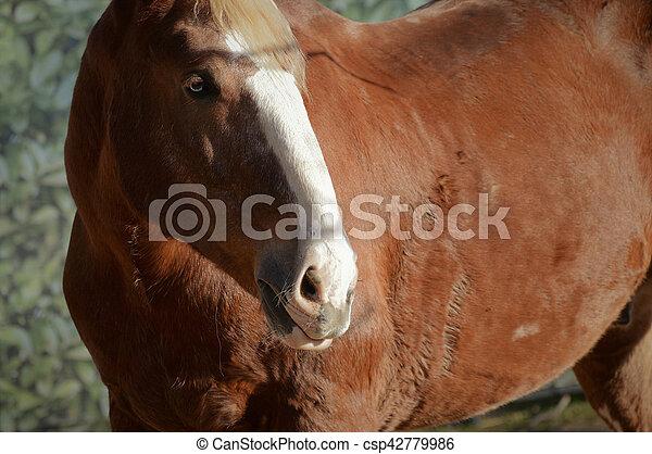 Horse - csp42779986